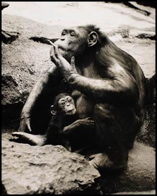 monkey lung cancer awareness